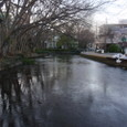 水の街三島の市街地を流れる、清明な水
