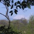 湧水散策路からの富士