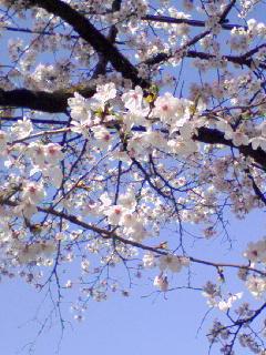 4月12日の易経からのメッセージ・乾為天けんいてん・3爻蠆自を彊(つよ)くする
